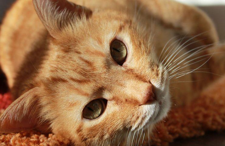 cat friendly apartments