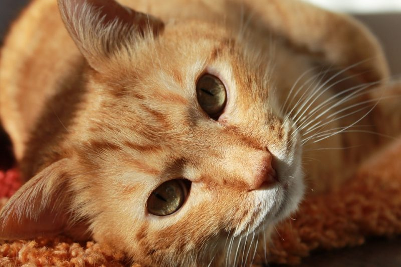 Cat Friendly: $25 / month pet rent. $250 one-time pet fee.