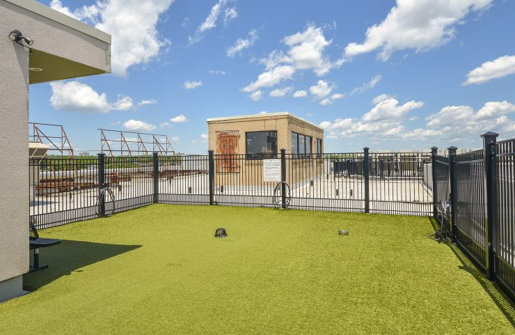 Fenced in Rooftop Dog Park